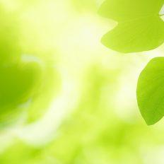 人と環境を地球規模で考える会社 - ビーテック -